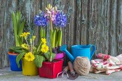 Compostion весны садовничая с яркими цветками Стоковое фото RF