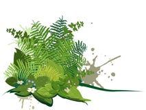 Composto delle piante della foresta Fotografia Stock
