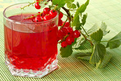 Compote of red currants Stock Photos