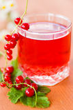 Compote of red currants Royalty Free Stock Photography