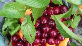 Compote van vruchten en munt Stock Foto's