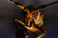 Free Compound Eyes  Stock Images - 14392934
