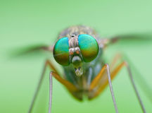 Compound Eyes Stock Images