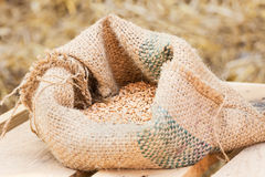 Compound Feed. In sacks fodder for the animals Stock Image
