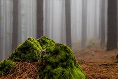 compozition en el bosque Imagen de archivo