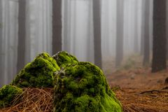 compozition i skogen Fotografering för Bildbyråer