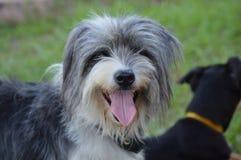 A compra de DonÂ't um cão, adota um amigo Fotos de Stock Royalty Free