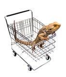 Compra do animal de estimação fotografia de stock