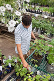 Compra do homem para plantas potted Imagens de Stock