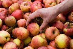 Compras de Apple en el mercado del granjero Fotos de archivo