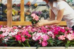 Compras de la mujer en centro de jardín Imagen de archivo libre de regalías