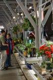 Compras de los pares para las flores del día de Mother's Foto de archivo libre de regalías