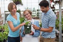 Compras de los pares para las plantas Fotografía de archivo