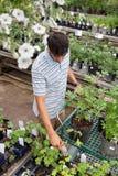 Compras del hombre para las plantas potted Imagenes de archivo