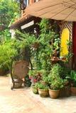 Compre com lembranças e as plantas tropicais no centro de cidade de Vientiane, Laos Imagem de Stock Royalty Free