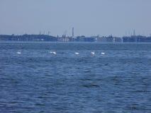 """Compre el ska del """"de GdaÅ, cisnes, astilleros, mar Báltico Fotos de archivo libres de regalías"""