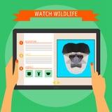 Compressa di Digital con il ritratto della scimmia di colobus e sito Web circa fauna selvatica Fotografia Stock