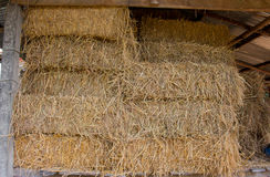 Compressed straw from rice background in farming in Thailand. Royalty Free Stock Photography