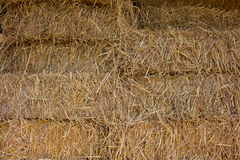 Compressed straw from rice background in farming in Thailand. Stock Photo