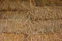Compressed straw from rice background in farming in Thailand. Royalty Free Stock Photo