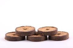 Comprimés de noix de coco pour l'élevage Images libres de droits