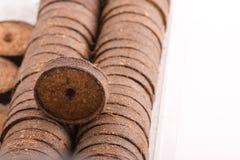 Comprimés de noix de coco pour l'élevage Photos libres de droits