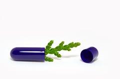 Comprimido com sprout Imagem de Stock