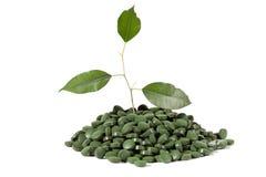Comprimidos verdes Fotos de Stock Royalty Free