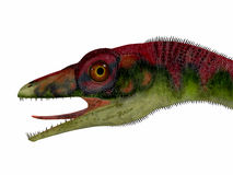 Compsognathus Dinosaur Head Stock Image