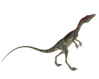 Compsognathus dinosaur walking - 3D render Stock Photos