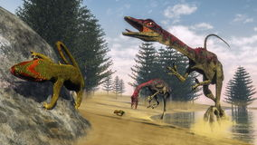 Compsognathus dinosaurs - 3D render Stock Photography