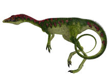 Compsognathus Side Profile. Compsognathus was a small carnivorous theropod dinosaur that lived during the Jurassic Period of Europe Royalty Free Stock Photography