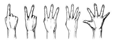 Compte avec les mains 1,2,3,4,5 de doigts Images libres de droits