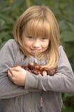 Compte des conkers d'un arbre de marron d'Inde Images stock