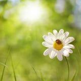 Fantasía de la primavera Foto de archivo libre de regalías