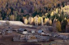 Compuesto del Kazakh y bosque del abedul Foto de archivo libre de regalías