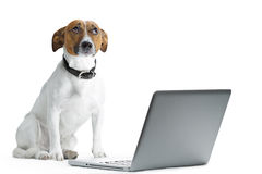Computador do cão Fotos de Stock Royalty Free