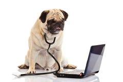 Computador do cão isolado no doutor branco do fundo Fotos de Stock
