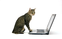 COMPUTADOR PORTÁTIL e gato Imagens de Stock Royalty Free