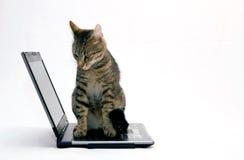 COMPUTADOR PORTÁTIL e gato Foto de Stock Royalty Free