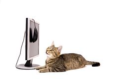 Computadora portátil y gato Fotos de archivo