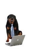Computadora portátil y perro imagen de archivo