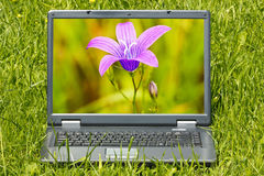 Computer with beautiful flower  on screen Royalty Free Stock Image