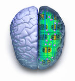 Computer Brain Circuit Technology. Brain showing a computer circuit board inside on a white background Stock Photo