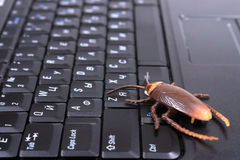 Computer bug. A bug on laptop keyboard stock images