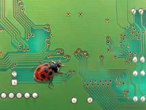 Computer bug Stock Photo