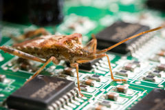 Computer Bug. A nasty bug inside of a computer, causing problems Royalty Free Stock Photos