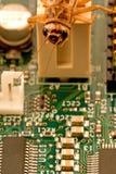 Computer bug. A macro shot of a computer bug stock photography