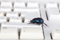 Computer bug on the keyboard Stock Photos