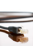 Computer cable with reflection. Computer ethernet cable on neutral background with reflection Stock Images